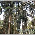 20120308-29-溪頭森林遊樂區-空中走廊