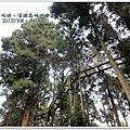 20120308-30-溪頭森林遊樂區-空中走廊