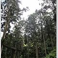20120308-31-溪頭森林遊樂區-空中走廊
