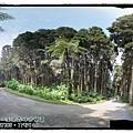 20120308-32-溪頭森林遊樂區-空中走廊全景