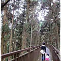 20120308-38-溪頭森林遊樂區-空中走廊