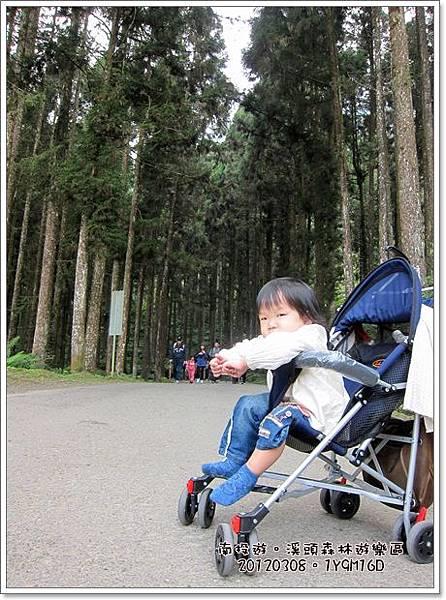 20120308-48-溪頭森林遊樂區-空中走廊
