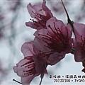 20120308-54-溪頭森林遊樂區