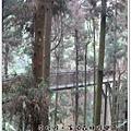 20120308-75-溪頭森林遊樂區