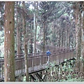 20120308-78-溪頭森林遊樂區