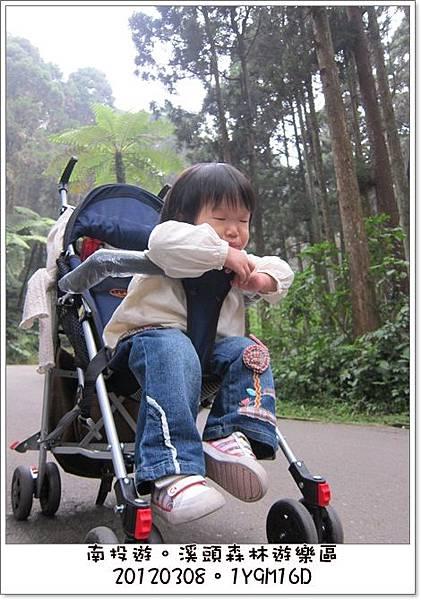 20120308-80-溪頭森林遊樂區