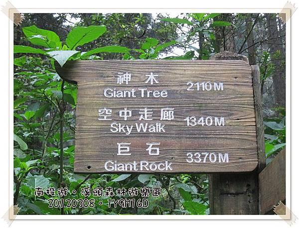 20120308-81-溪頭森林遊樂區2