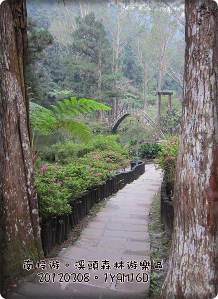 20120308-82-溪頭森林遊樂區