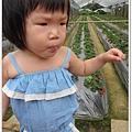 20120318-5-內湖採草莓