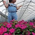 20120318-6-內湖採草莓