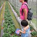 20120318-12-內湖採草莓