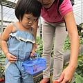 20120318-14-內湖採草莓