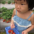 20120318-15-內湖採草莓