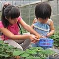 20120318-16-內湖採草莓