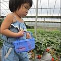 20120318-17-內湖採草莓