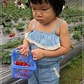 20120318-19-內湖採草莓