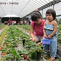 20120318-21-內湖採草莓