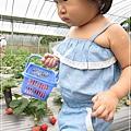 20120318-22-內湖採草莓