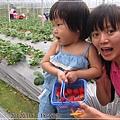 20120318-23-內湖採草莓