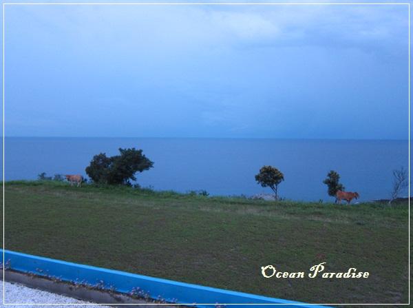 Ocean Paradise-海境-32-綠野