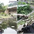 動物園-8