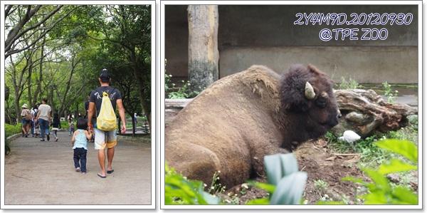 動物園-9