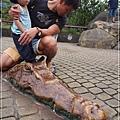動物園-12
