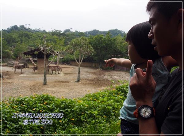 動物園-13