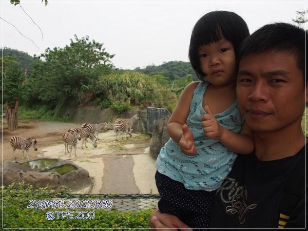 動物園-16