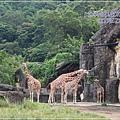 動物園-17