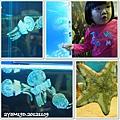 觀賞魚博覽會-20121109-4
