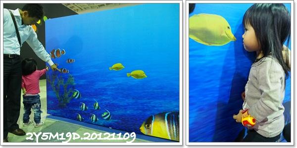 觀賞魚博覽會-20121109-5