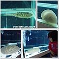 觀賞魚博覽會-20121109-8