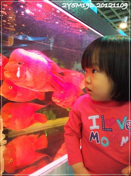 觀賞魚博覽會-20121109-9