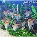 觀賞魚博覽會-20121109-10