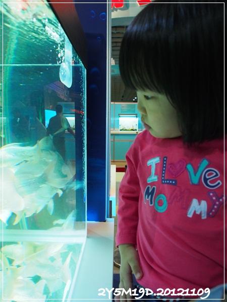 觀賞魚博覽會-20121109-11