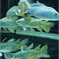 觀賞魚博覽會-20121109-12