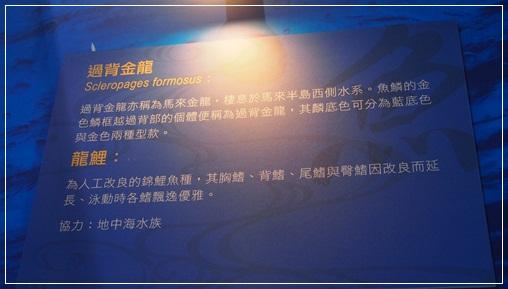 觀賞魚博覽會-20121109-13