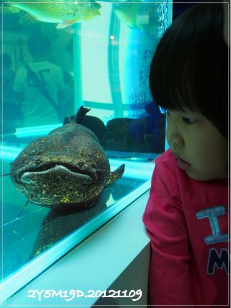 觀賞魚博覽會-20121109-14