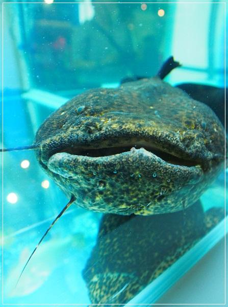 觀賞魚博覽會-20121109-15