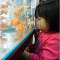 觀賞魚博覽會-20121109-16