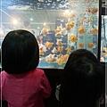 觀賞魚博覽會-20121109-17