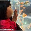 觀賞魚博覽會-20121109-18