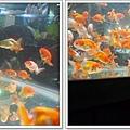 觀賞魚博覽會-20121109-19