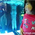 觀賞魚博覽會-20121109-21