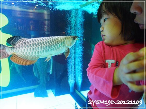 觀賞魚博覽會-20121109-22