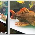 觀賞魚博覽會-20121109-23
