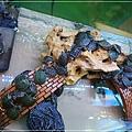 觀賞魚博覽會-20121109-24