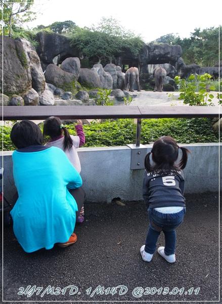 20120111-動物園-8