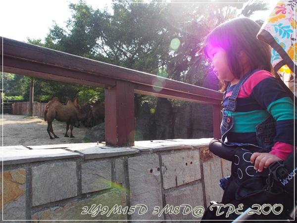 20130308-台北動物園-16
